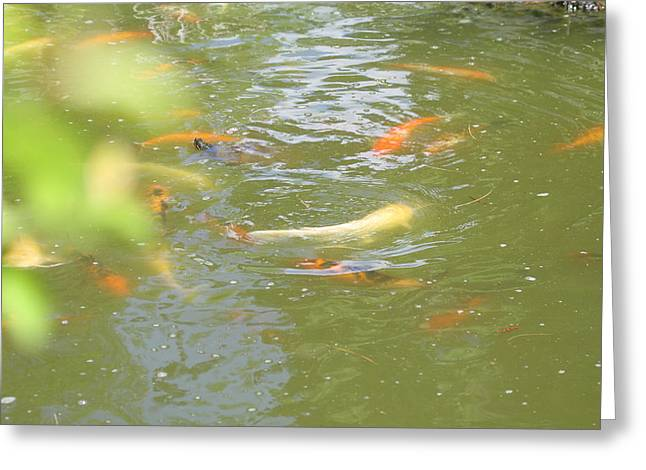 National Zoo - Fish - 011316 Greeting Card by DC Photographer