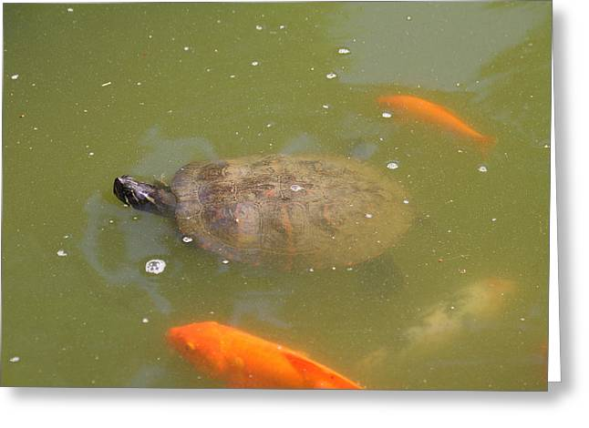 National Zoo - Fish - 011318 Greeting Card by DC Photographer