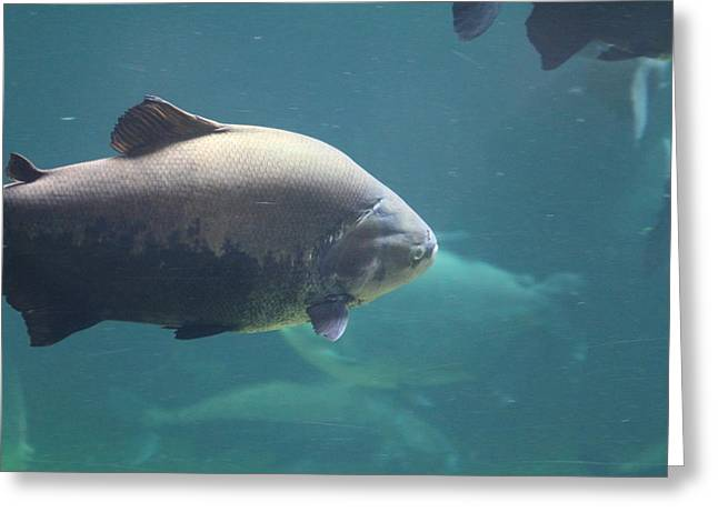 National Zoo - Fish - 011320 Greeting Card by DC Photographer