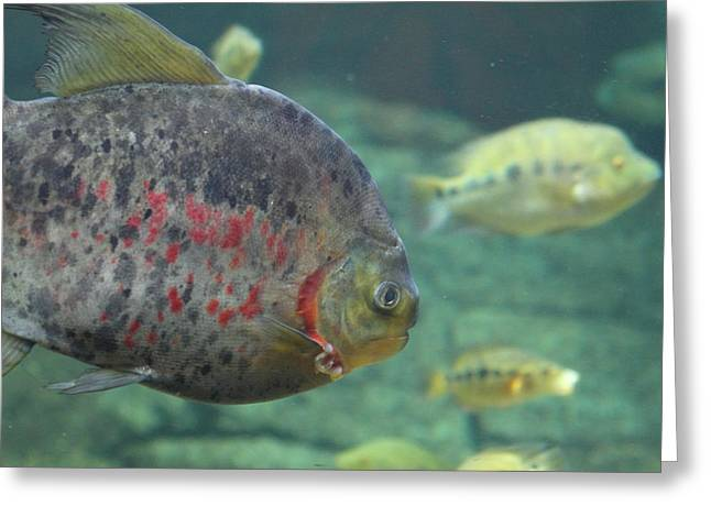 National Zoo - Fish - 011321 Greeting Card by DC Photographer