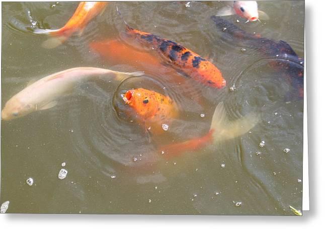 National Zoo - Fish - 01135 Greeting Card