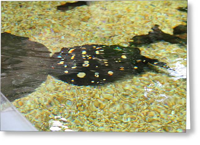 National Zoo - Fish - 01138 Greeting Card by DC Photographer