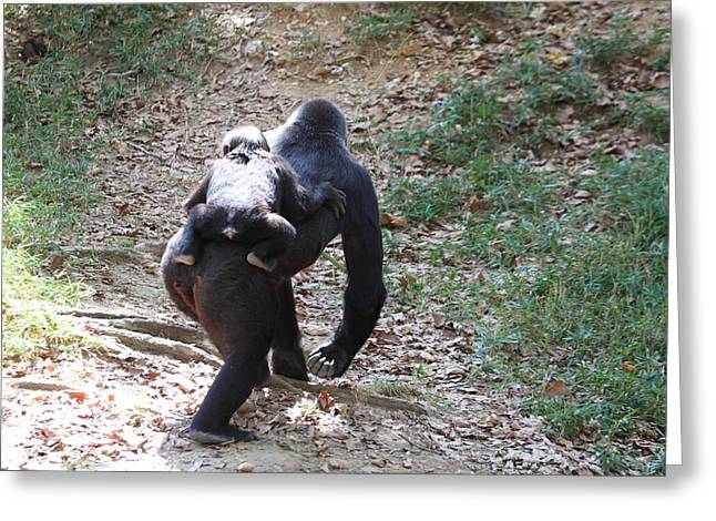 National Zoo - Gorilla - 011311 Greeting Card
