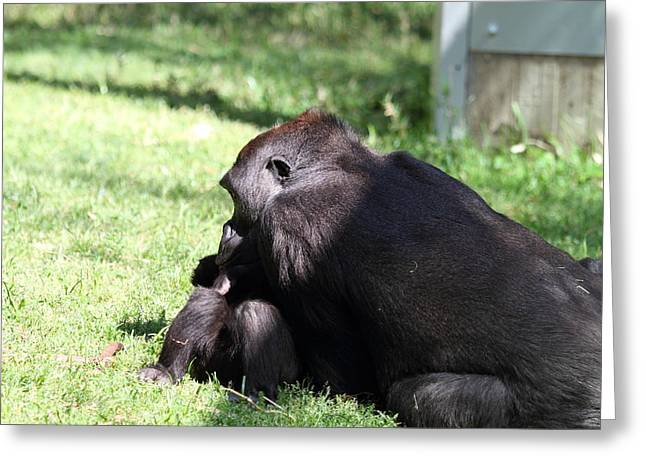 National Zoo - Gorilla - 011325 Greeting Card
