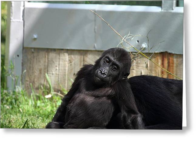 National Zoo - Gorilla - 011336 Greeting Card by DC Photographer