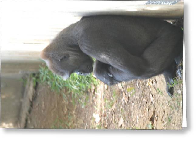National Zoo - Gorilla - 121247 Greeting Card by DC Photographer
