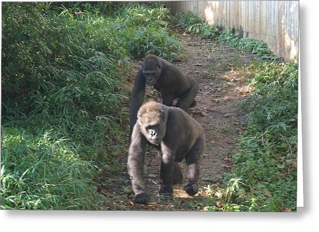 National Zoo - Gorilla - 12128 Greeting Card by DC Photographer