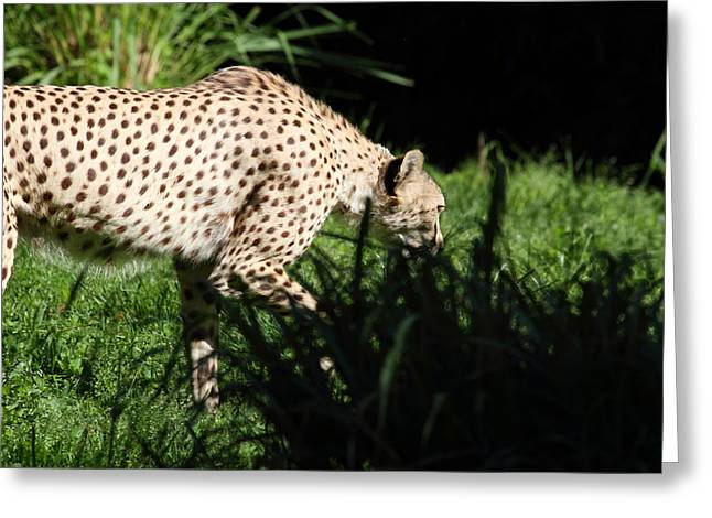 National Zoo - Leopard - 011311 Greeting Card by DC Photographer