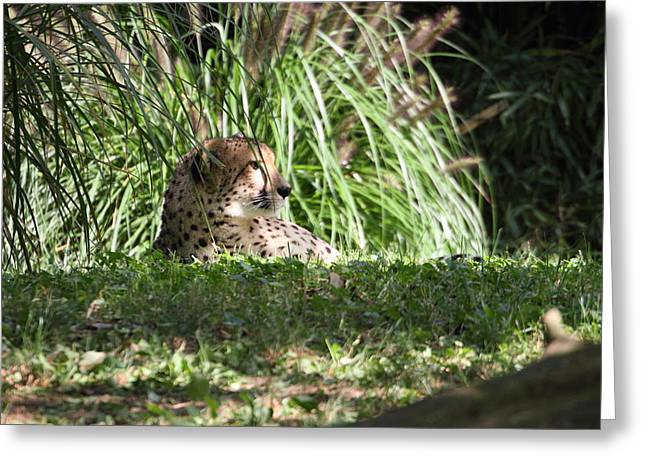 National Zoo - Leopard - 01133 Greeting Card