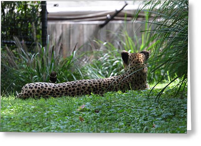 National Zoo - Leopard - 01135 Greeting Card by DC Photographer