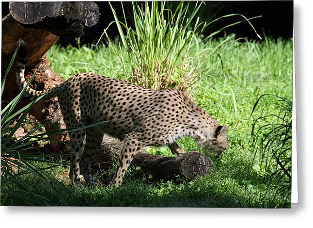 National Zoo - Leopard - 01137 Greeting Card