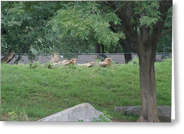 National Zoo - Leopard - 12121 Greeting Card by DC Photographer