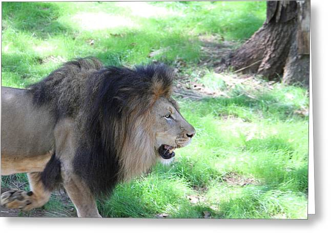 National Zoo - Lion - 01136 Greeting Card by DC Photographer
