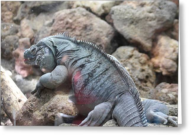 National Zoo - Lizard - 01131 Greeting Card by DC Photographer