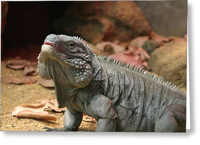 National Zoo - Lizard - 12121 Greeting Card