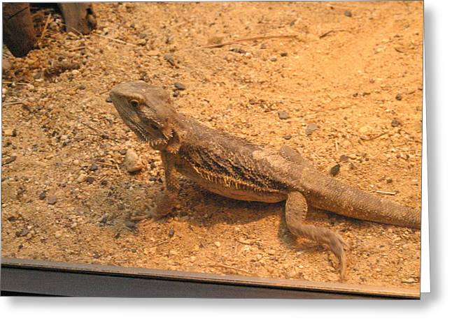 National Zoo - Lizard - 12126 Greeting Card by DC Photographer