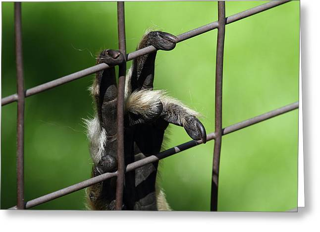 National Zoo - Mammal - 011312 Greeting Card by DC Photographer