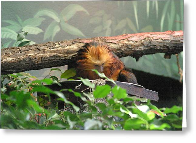 National Zoo - Mammal - 121211 Greeting Card by DC Photographer