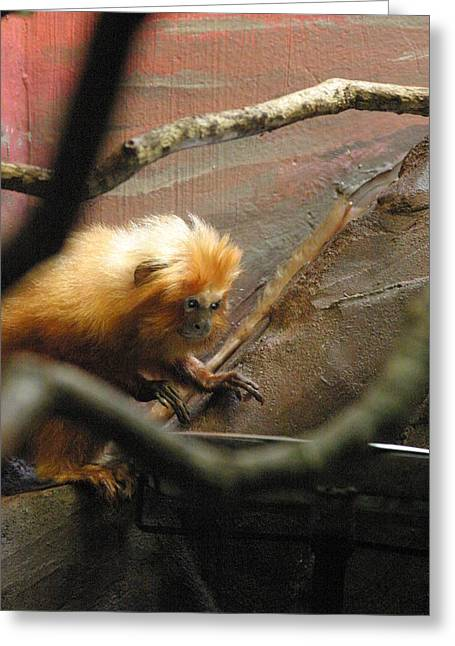 National Zoo - Mammal - 121214 Greeting Card by DC Photographer