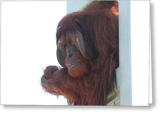 National Zoo - Orangutan - 01136 Greeting Card by DC Photographer