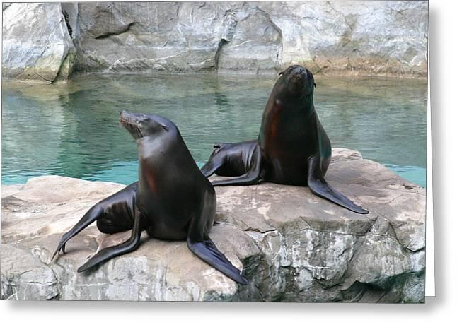 National Zoo - Sea Lion - 12124 Greeting Card