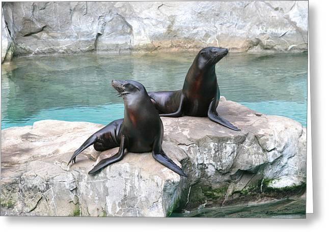 National Zoo - Sea Lion - 12126 Greeting Card by DC Photographer