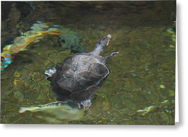 National Zoo - Turtle - 01131 Greeting Card