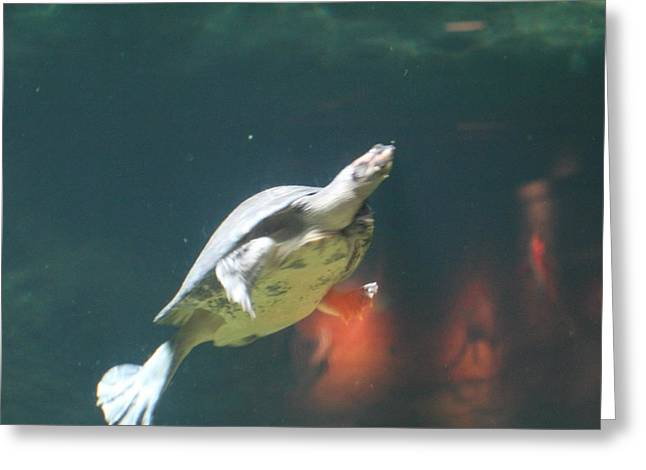 National Zoo - Turtle - 01135 Greeting Card by DC Photographer
