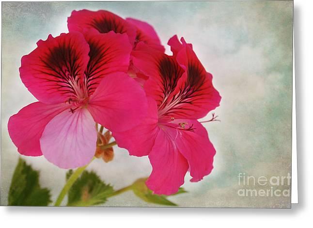 Natural Beauty Greeting Card by Claudia Ellis