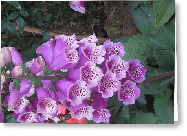 Natural Bouquet Bunch Of Spiritul Purple Flowers Greeting Card by Navin Joshi