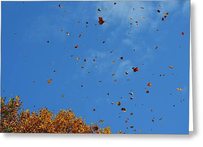Natural Confetti Greeting Card by Mary Zeman