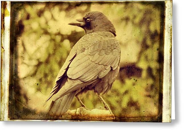 Natural Crow Greeting Card