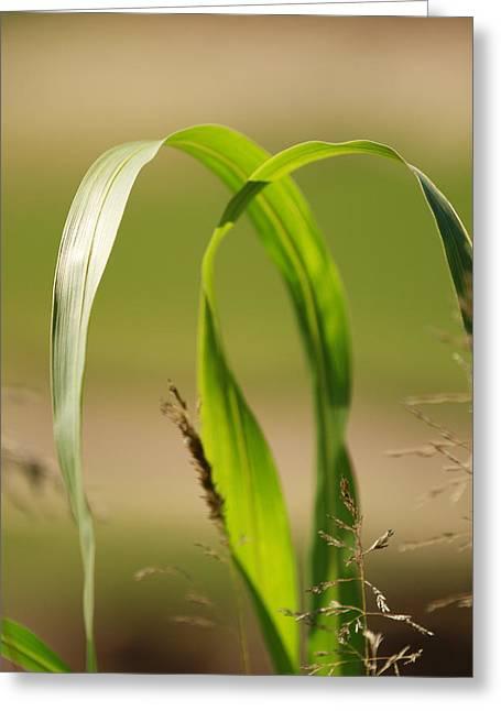 Natural Grass Greeting Card by Tinjoe Mbugus