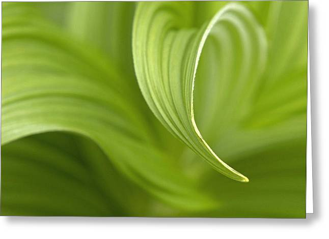 Natural Green Curves Greeting Card by Claudio Bacinello
