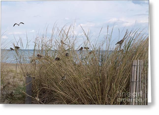 Natural Habitat Greeting Card by Arlene Carmel
