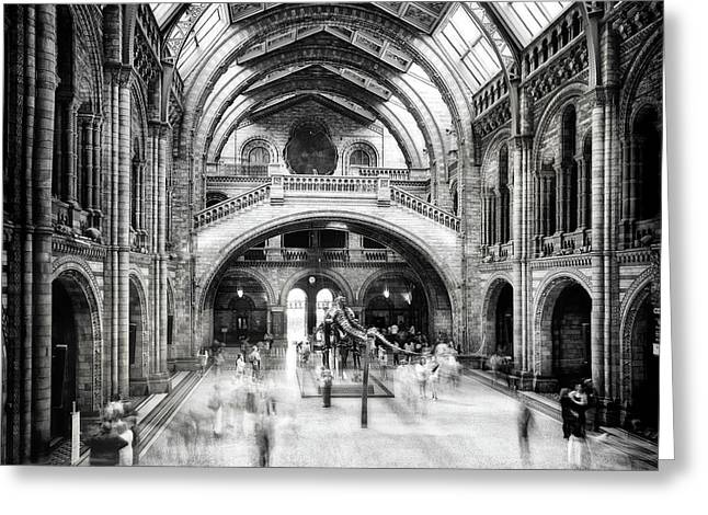 Natural History Museum Of London Greeting Card