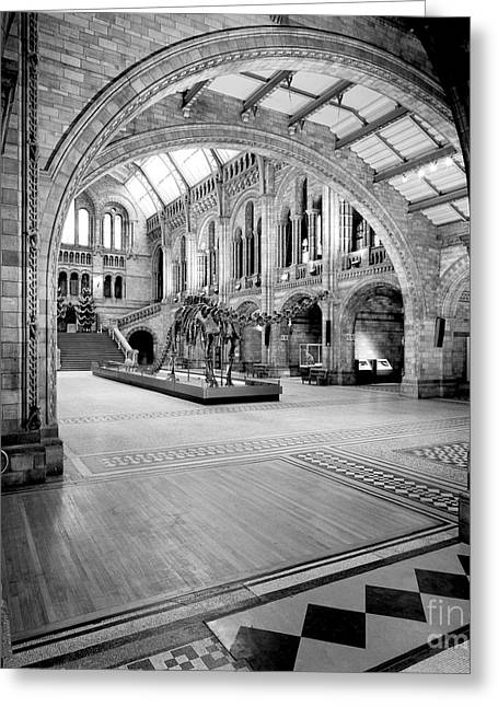 Natural History Museum's Central Hall Greeting Card by Natural History Museum, London