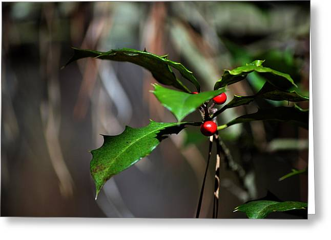 Greeting Card featuring the photograph Natural Holly Decor by Bill Swartwout