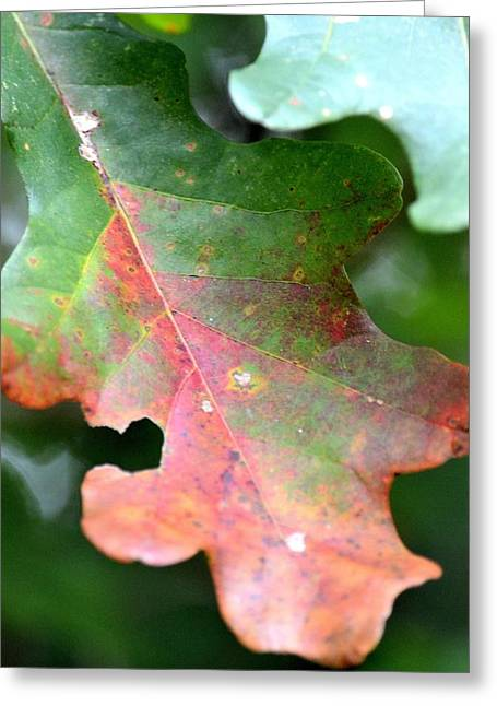 Natural Oak Leaf Abstract Greeting Card by Maria Urso