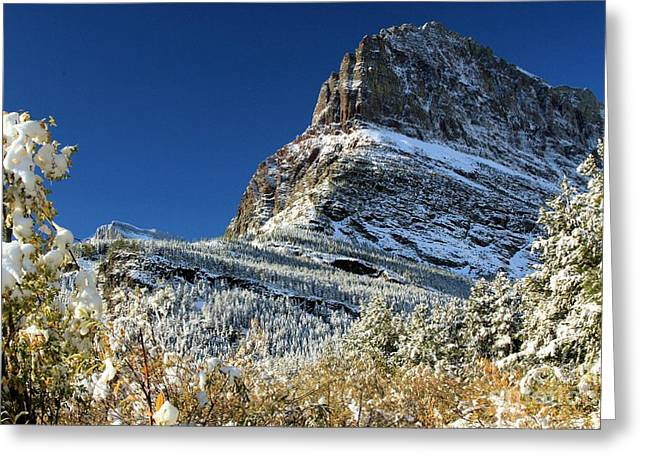 Natural Picture Frame Greeting Card by Adam Jewell