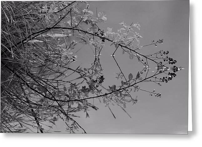 Natural Reflection Greeting Card by Karol Livote