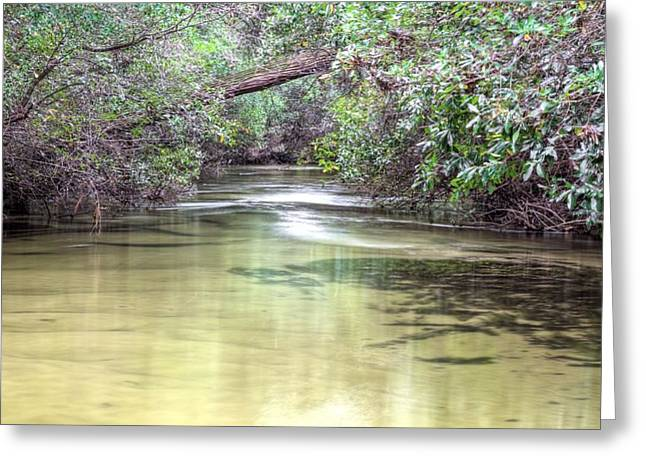 Natural Springs Greeting Card by JC Findley