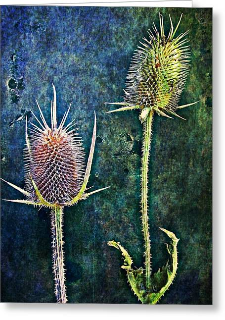 Nature Abstract 12 Greeting Card by Maria Huntley
