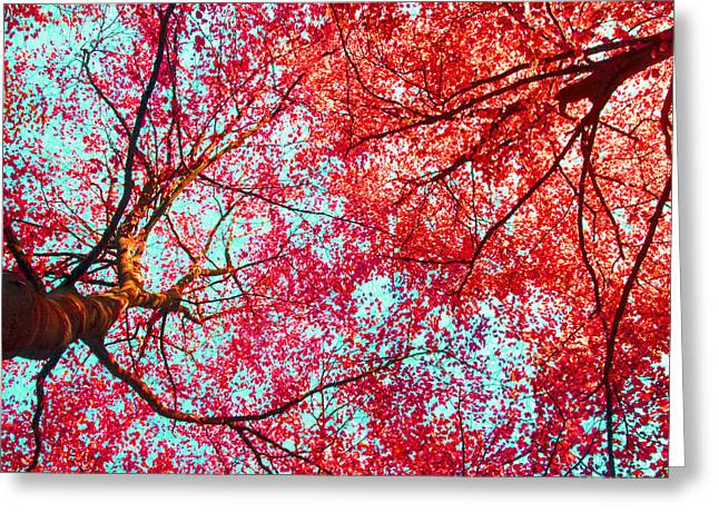 Abstract Red Blue Nature Photography Greeting Card by Artecco Fine Art Photography