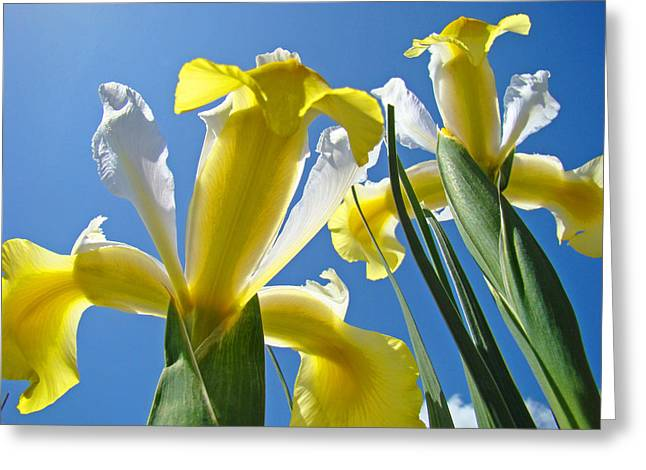 Nature Art Prints Yellow White Irises Flowers Greeting Card by Baslee Troutman