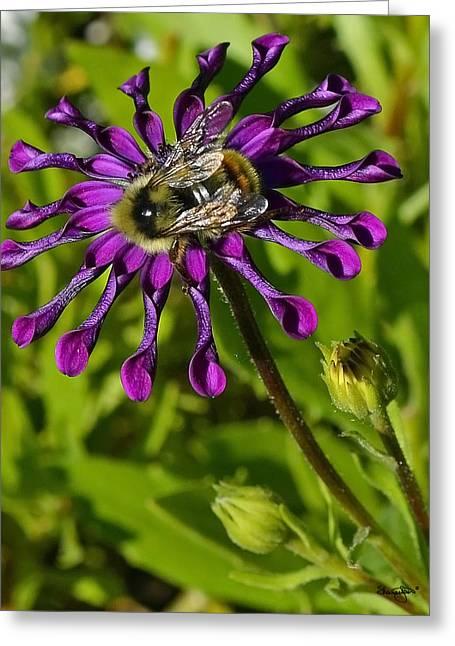 Nature At Work Greeting Card