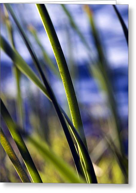 Nature Bokeh Greeting Card by Karim SAARI