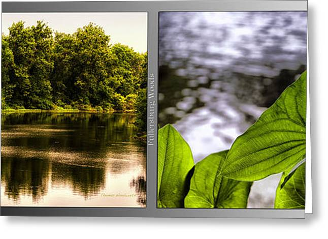 Nature Center 01 Water Leaf Fullersburg Woods 2 Panel Greeting Card