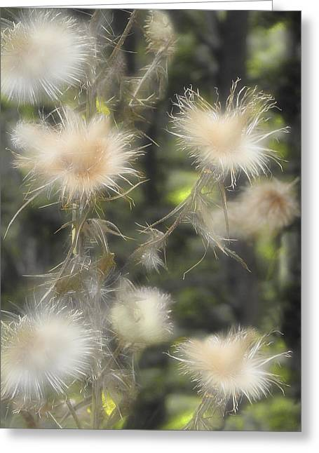 Nature Daze Greeting Card by Gothicrow Images
