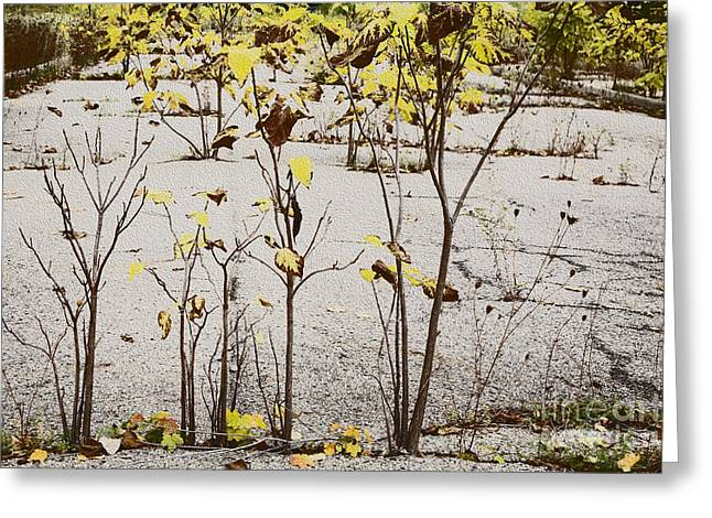 Nature Defeats Cement Greeting Card